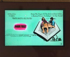 born free 1966 original vintage film glass advertising slide virginia mckenna, bill travers
