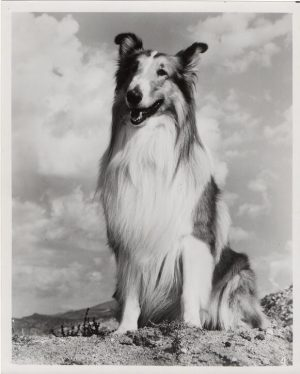 the magic of lassie 1978 publicity still (1)