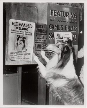 the magic of lassie 1978 publicity still (11)