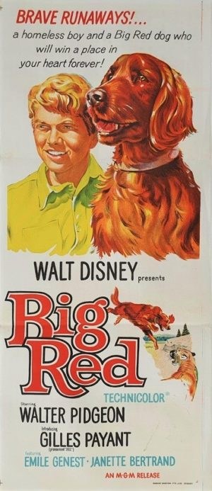 Big Red Australian daybill movie poster by Walt Disney (1) Irish Setter
