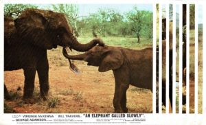 An Elephant Called Slowly Uk Front Of House Lobby Card (10)